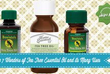 The 7 Wonders of Tea Tree Essential Oil and its Many Uses / Looking for an alternative all around home remedy for almost everything? You may find what you are looking for in tea tree oil. Learn more about its many uses by checking our blog.