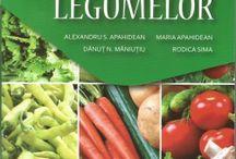 cultura-plantelor-aromatice-marar-cimbru-busuioc-coriandru