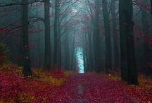 Serenity / by Linda Davis