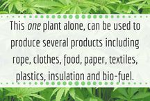 Hemp Facts / Infographics and facts on Hemp and Industrial Hemp