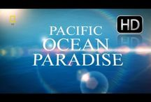 OCEAN DEVOTION VIDEOS! / These videos make you want to live like SpongeBob, under the Sea!