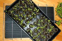 Gardening Gro Mats! / Gro Mats help young seeds germinate quickly