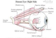 Eye Cataract, Motiya Bind