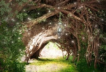 Enchanted forest / Magic and mystery, fairies, gnomes and fantasy creatures reside here in the enchanted wood