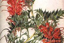 диковинные цветы