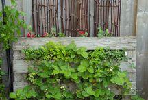 [ Garden ]
