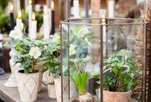 Planter/løk og knoll