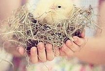 ༺♥༻SPRING༺♥༻✿Ꮥ℘ཞiŋᏩ ᏇɧįᎦ℘ҽཞᏕ︵‿✿