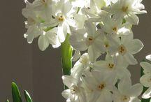 Spring / by Brigitta Barile