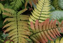 FERNS / Beautiful for my shade / by Bill Moser