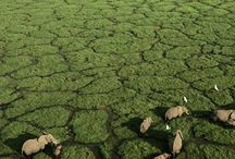 Africa botswana