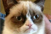 Funny / Collecting funny Grumpy Cat memes here.