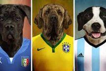 Fútbol / Soccer