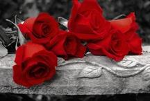 ruže ❤