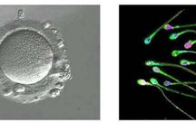 Vruchtbaarheid / Kinderen krijgen is niet voor iedereen vanzelfsprekend. Onderzoek wijst uit dat 1 op 6 koppels te maken krijgt met vruchtbaarheidsproblemen.   Er bestaan in onze maatschappij nog heel wat vooroordelen en misverstanden over (on)vruchtbaarheid, vruchtbaarheidsbehandelingen en donorschap. En er is een tekort aan sperma- en eiceldonoren. De reproductieve geneeskunde is bovendien nog in volle ontwikkeling, nieuwe mogelijkheden worden onderzocht en roepen vragen op.