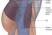 Muscles in parts