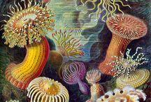botanical stories