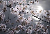 Flower_Blossom