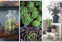 Indoor Gardening / by Lisa Mitchell