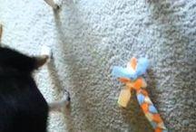 Dogs: Videos