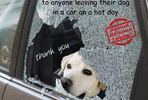 Animal Rights!