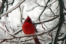 Holidays: Winter / by Lori Pinkham