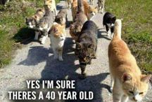Gekke Katten
