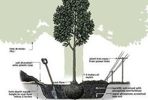 Zahradní tipy
