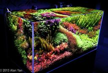 Freshwater Aquascaping and Saltwater aquariums