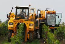 Celebrating Harvest Season / by Grape Growers of Ontario