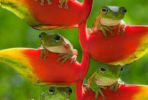 frogs&seahorse