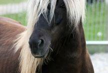Pony ♡