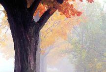 86- L'automne