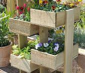 My veggie, herby garden