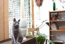 Silvercats
