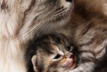 Mačiatko pri svojej mamičke