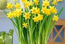 Spring & Easter Wedding