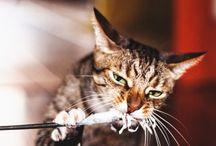 Cat photo/ Kocia Fotografia / https://www.facebook.com/monika.malek.fotografia?ref=hl - Fotografia Monika Małek