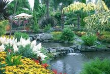 Flower Garden / In touch with nature.