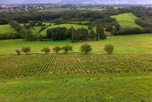 Vignobles du Jura