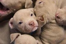 B.U.D.D.Y. / Cute pit bulls && other dogs / by Madison McLaughlin