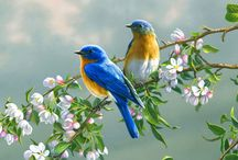 Bird Sanctuaries in India / Sanctuariesindia: Here You can get all information about Beautiful Bird Sanctuaries in India @ Sanctuariesindia.com