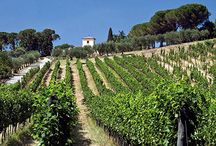 SOUTH ITALY WINERIES