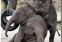 Elephants! / by Laura Sorci Fry