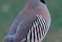 Sevimli Hayvanlar&Kuşlar