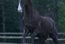 Equus Photos