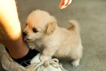 Cute dogs/puppies