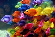 agua presente /  peces