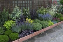 jersey plants direct  voucher code / Are you looking for jersey plants direct  voucher code, jersey plants direct  discount codes  get awesome discount.