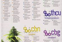 Cannabinoids: What do they do?